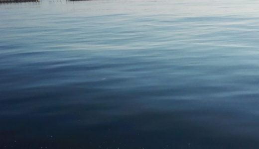 くじら、船釣りで命の尊さを実感する。