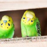換気扇に鳥が!換気扇フードに網を設置し定住を阻止するぞ!