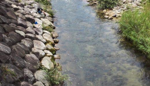 廿日市市での川遊びは岩倉ファームパークが最高!(2018年情報も追記)